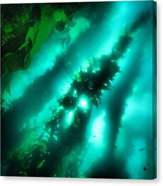 Scuba Diving Canvas Print - Love This Picture? Check Out My Gallery by Arturo Brook