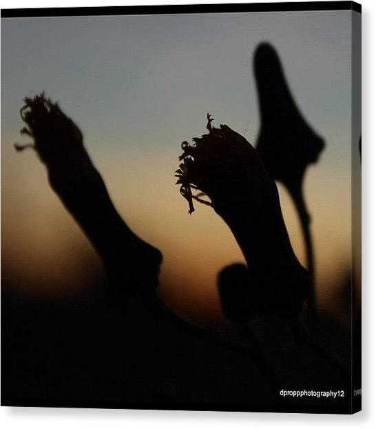 Prairie Sunsets Canvas Print - #tagsforlikes @tagsforlikes #instagood by Darryl Propp