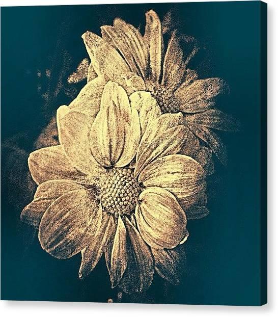 Irises Canvas Print - Instagram Photo by Richard Phyo