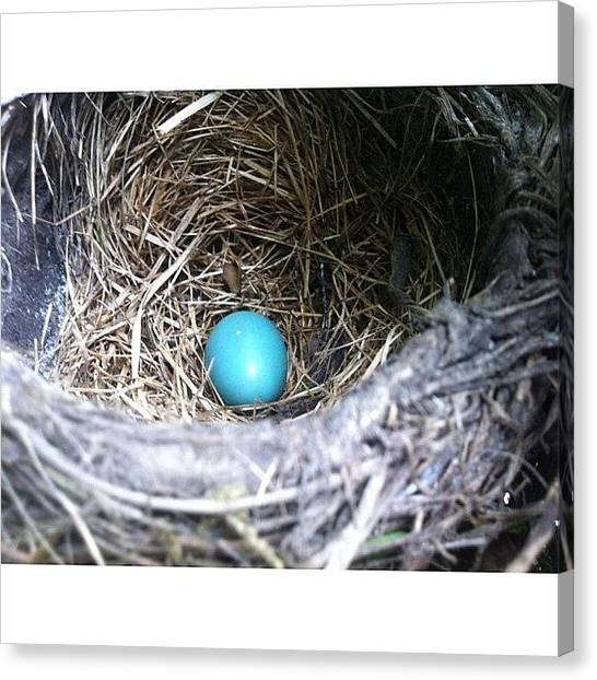 Robins Canvas Print - Instagram Photo by Mommy Inkwell