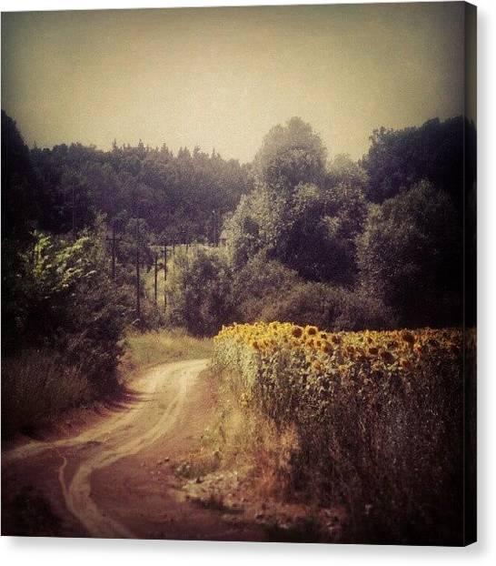 Sunflowers Canvas Print - Instagram Photo by Taras Paholiuk