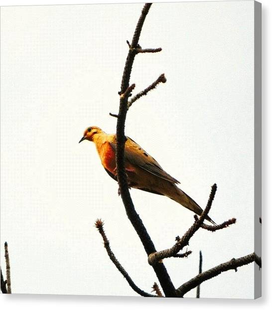 Finches Canvas Print - Instagram Photo by Najat Husain