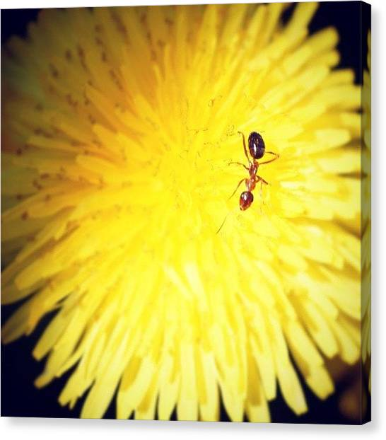 Ants Canvas Print - Instagram Photo by Brian Townsend
