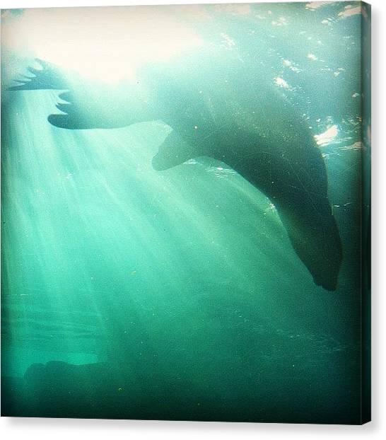 Aquariums Canvas Print - Instagram Photo by Daniel Corson