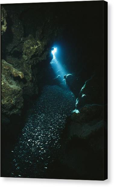 Underwater Caves Canvas Print - A Beam Of Sunlight Illuminates An by Raul Touzon