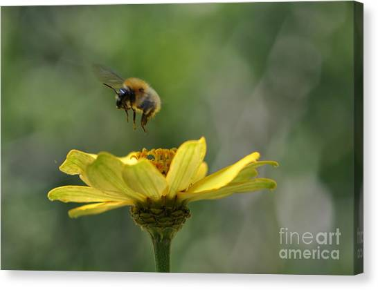 A Bee Canvas Print by Sylvie Leandre