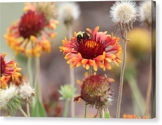 A Bee's Bliss Canvas Print by Janet Mcconnell