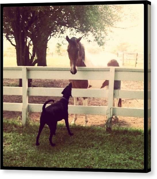Horse Farms Canvas Print - A Big Dog?? by Corrie Pannell Fleming