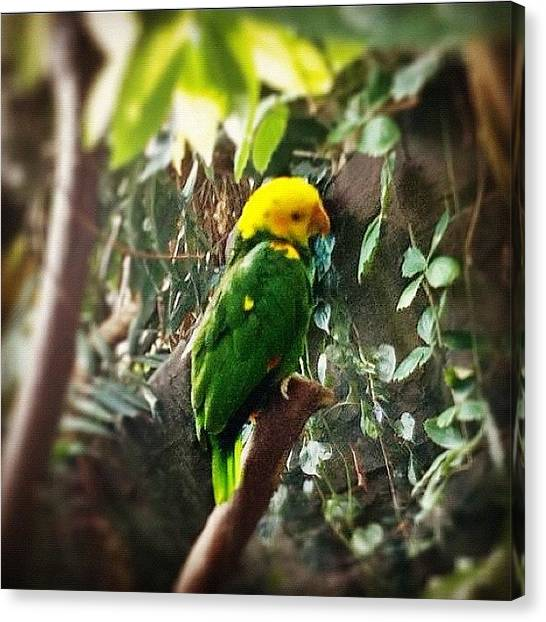 Aquariums Canvas Print - A Blue-fronted Amazon #parrot From The by Victor Wong