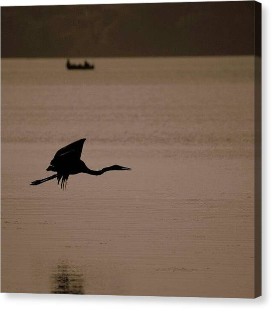 Herons Canvas Print - A Blue Heron Flew Just Feet Above Me 9 by Maria Firkaly