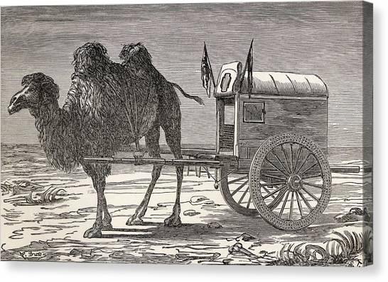 Gobi Desert Canvas Print - A Camel Pulling A Carriage by Ken Welsh