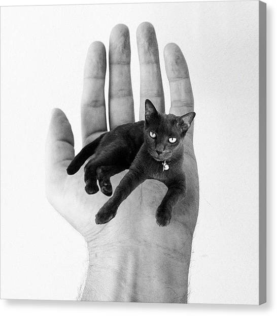 Edit Canvas Print - A Cat In The Hand Is Worth by Cameron Bentley