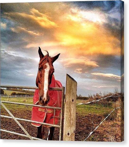 Horse Farms Canvas Print - A Cold Autumn Sunset With Added by Phil Martin
