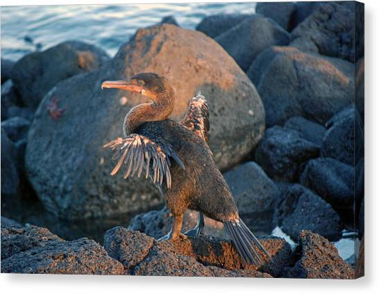 A Cormorant At Sunset Canvas Print