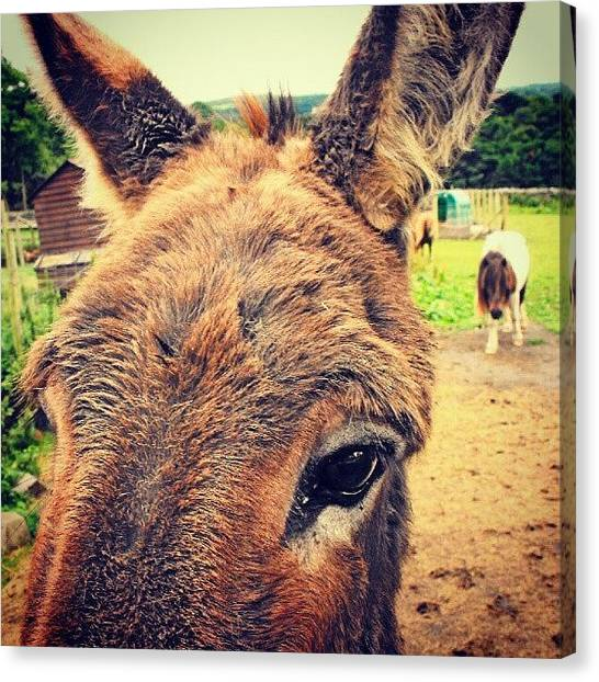 Donkeys Canvas Print - A #donkey And A #pony From #llanfair by Alexandra Cook