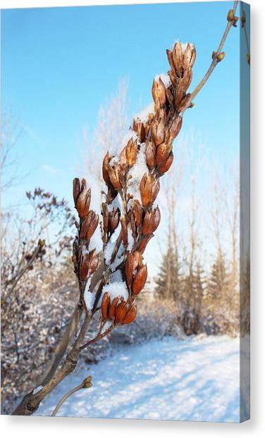 A Dose Of Winter Canvas Print