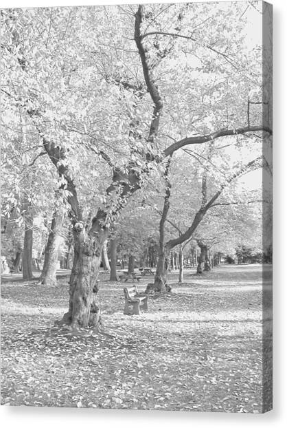 A Fall Day In Black And White Canvas Print