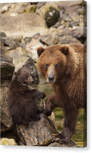 Bear Claws Canvas Print - A Family Portrait by Tim Grams