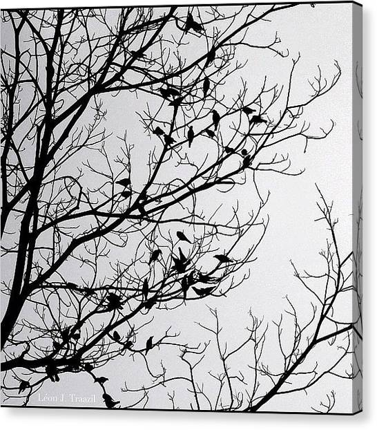 Flycatchers Canvas Print - A Flocking Silhouette by Leon Traazil