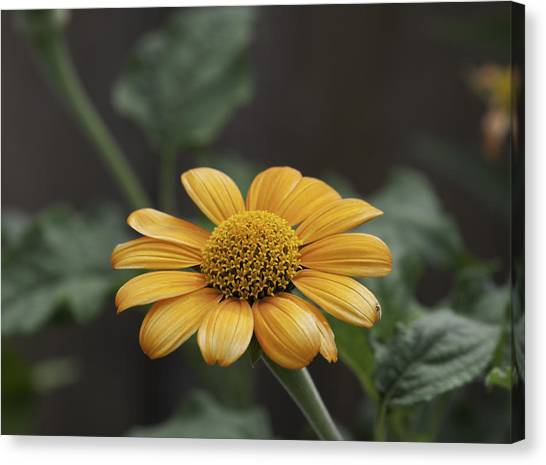 A Flowers Flower Canvas Print