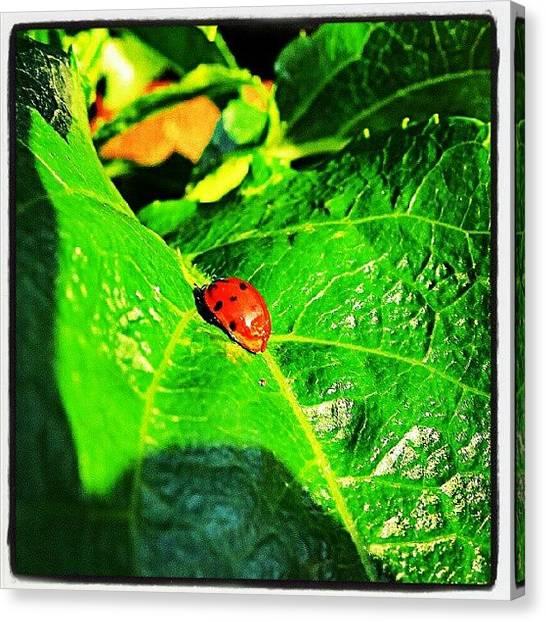Ladybugs Canvas Print - A Garden Trip by Hans Fotoboek