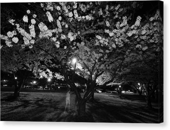 Ohio University Canvas Print - A Ghost In The Cherry Blossoms by Shirley Tinkham