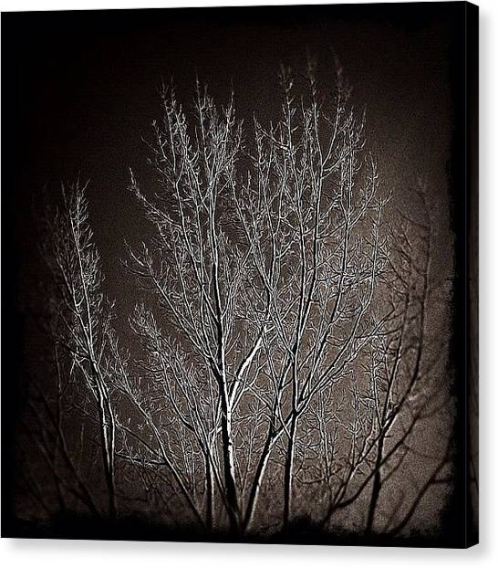 Manitoba Canvas Print - A Gloomy Tree For A Gloomy Day! by Jessica Mutimer
