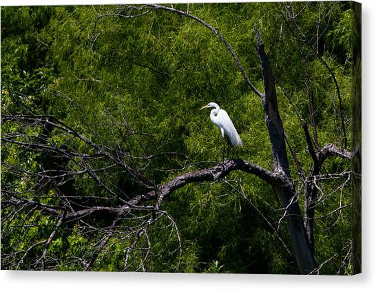 Spring Canvas Print - A Great Egret In A Green Forest by Ellie Teramoto