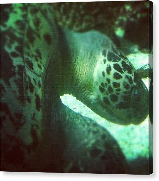 Sea Turtles Canvas Print - A #green #sea #turtle (chelonia Mydas) by Victor Wong