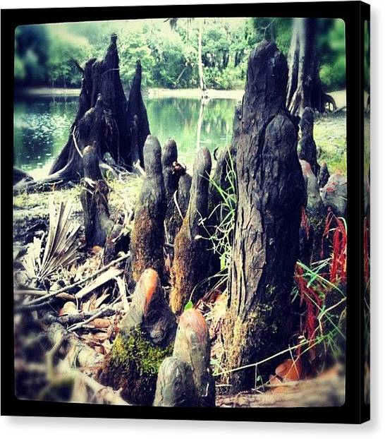 Swamps Canvas Print - A Knolly Place by Dustin Goolsby
