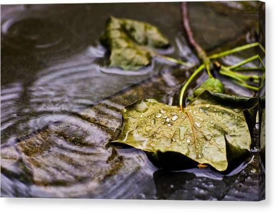 A Leaf In The Rain Canvas Print