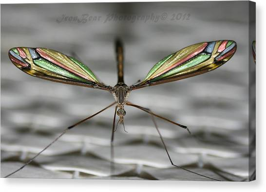 A Little Bling For The Wings Canvas Print by Ted Albert