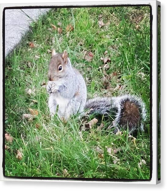 Squirrels Canvas Print - A Little Friend Having Some Lunch by Luis Alberto