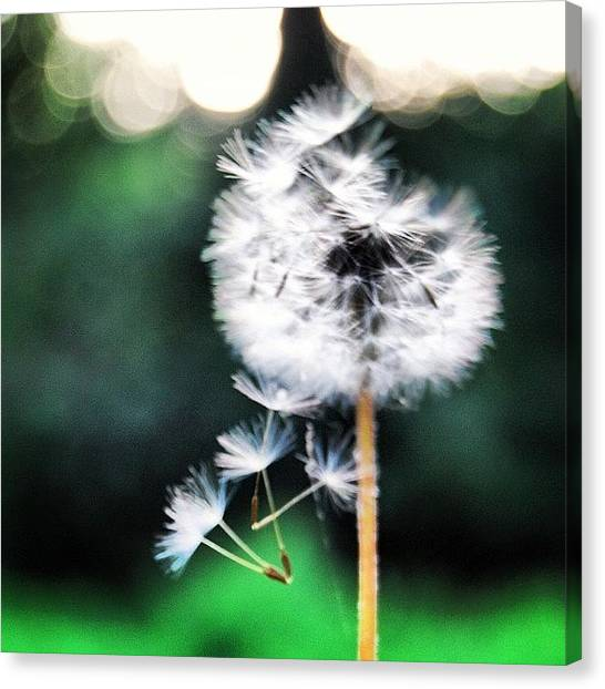 Fairies Canvas Print - A Little Out Of Focus by Jessica Daubenmire