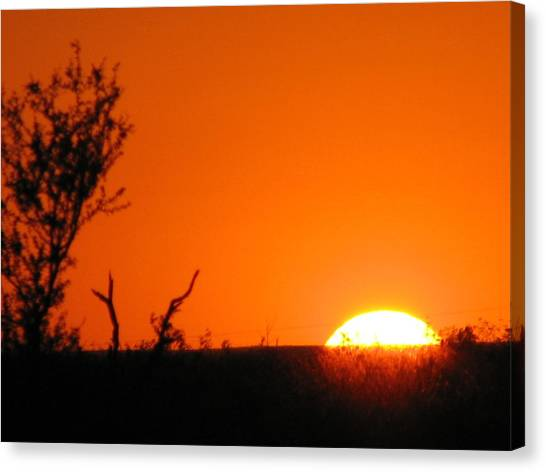 The University Of Texas Canvas Print - A Longhorn Sunset by Shawn Hughes