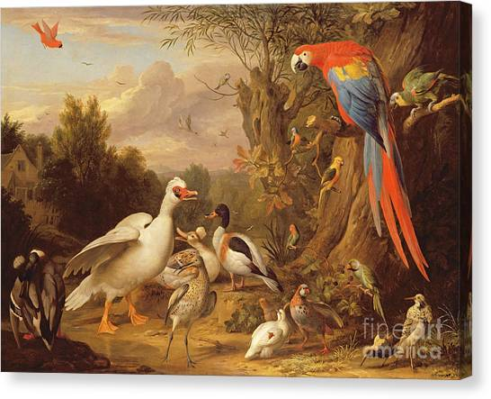 Macaws Canvas Print - A Macaw - Ducks - Parrots And Other Birds In A Landscape by Jakob Bogdani