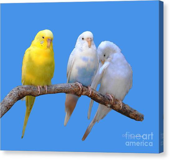 A Pair And A Spare Canvas Print by DiDi Higginbotham
