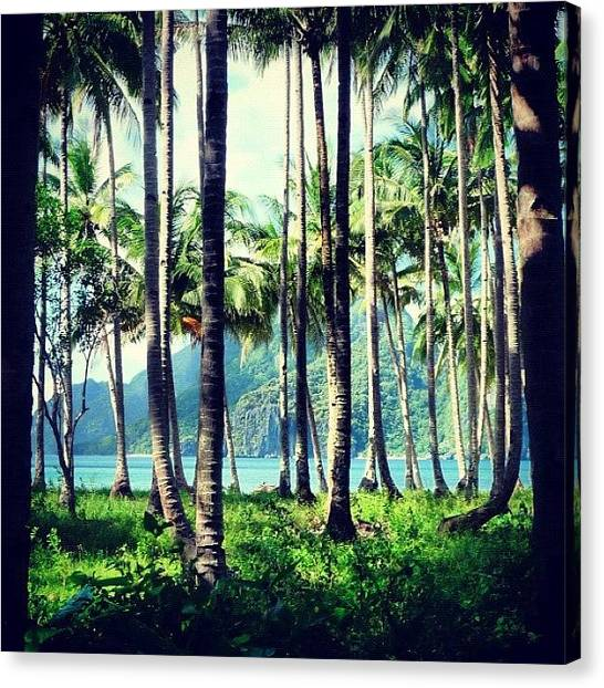 Jungles Canvas Print - A Piece Of #paradise #jungle #elnido by Stan Chashchnikov