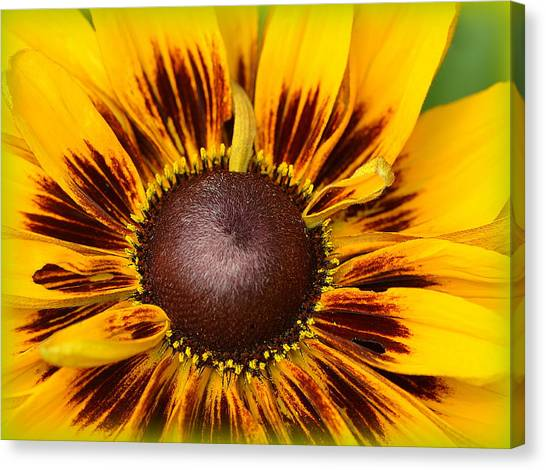 A Pocket Full Of Sunshine... Canvas Print