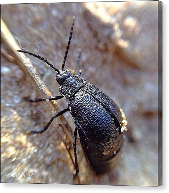 Beetles Canvas Print - A Quick Share Before I Continue My by Willem Smit