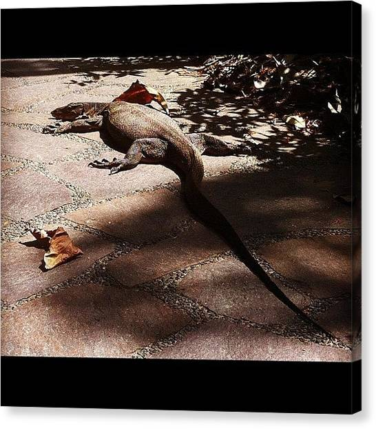Lizards Canvas Print - A Rare Sighting Of This In The City by Ji Lyn Ho