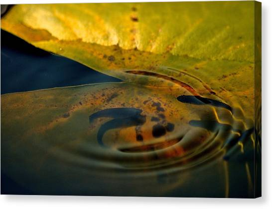 A Ripple In Time Canvas Print by Rachel Rodgers