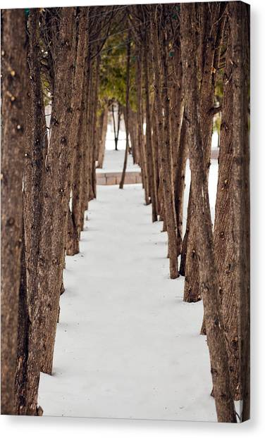 A Row Of Trees Outside In The Snow During Winter. Canvas Print by Adam Hester