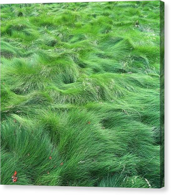 College Canvas Print - A Sea Of Green #awesome by Danielle N