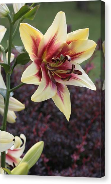 A Single Bloom Canvas Print by Mike Lytle