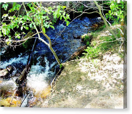 A Small Creek Canvas Print