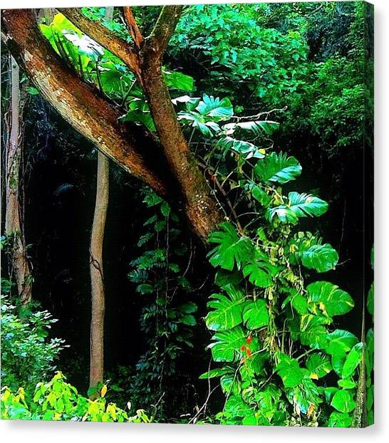 Jungles Canvas Print - A #spiral #staircase Of #tropical by Debi Tenney