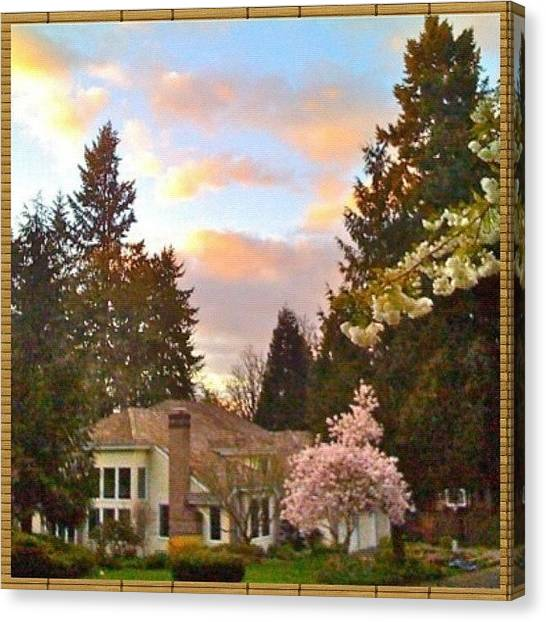 Apples Canvas Print - A Spring Evening - Lake Oswego Or by Anna Porter
