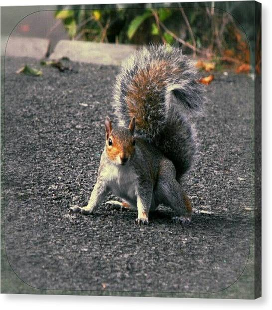 Squirrels Canvas Print - A Squirrel by Alexandra Cook