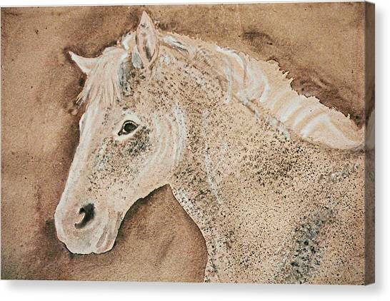 A Stallion Canvas Print by Remy Francis